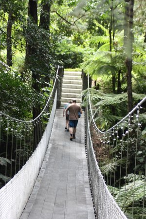 Arenal Observatory Lodge & Spa: bridge to pool