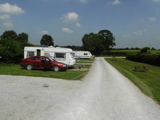 Adare Camping and Caravan Park : Beautifully kept hard stands