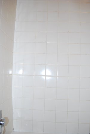 Ramada Flagstaff East: Mildew in the grout!!!