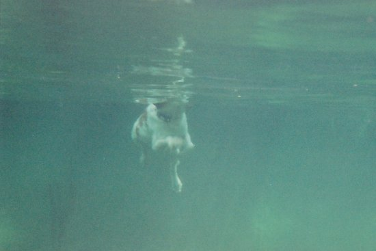 Cypress Frio Waters: Super swimmer!
