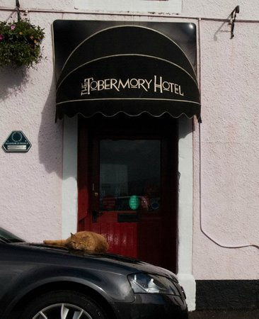 The Tobermory Hotel: The Tobermory Cat