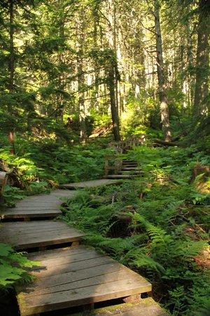 Giant Cedars Boardwalk Trail : Boardwalk