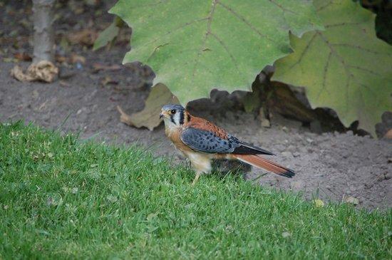 La Posada del Quinde : Bird life at hotel
