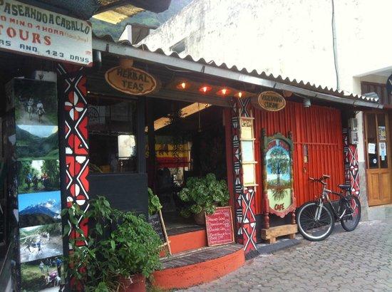 Sativa Studio Cafe: oasis