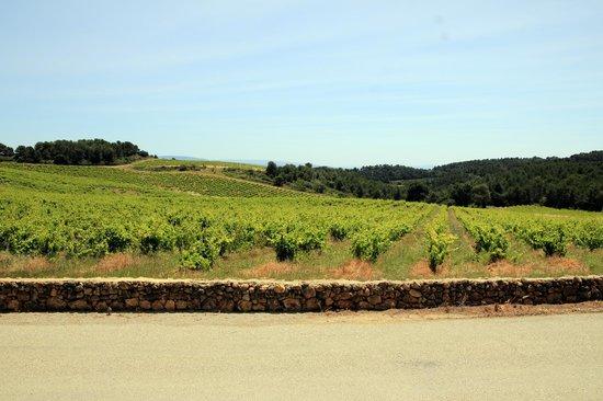 Domaine de Coyeux : Vineyards