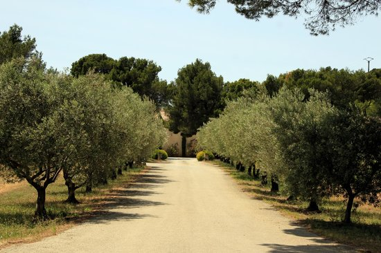 Domaine de Coyeux : Drive up to the winery