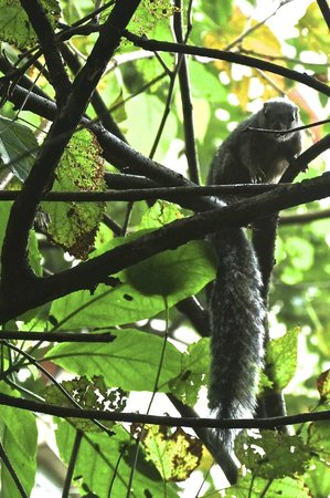 """Kilimanjaro Mountain Resort: the """"resident"""" squirrel, not too happy that I am taking a photo of him"""