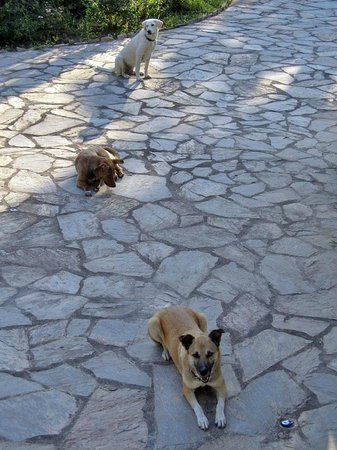 Romantik Villa Dalla : 3 liebenswerte und sehr zutrauliche Hunde (gehören mit zur Anlage)