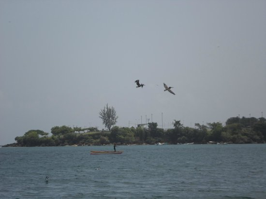 Turtle Beach by Rex Resorts: Pelicans swooping over sea