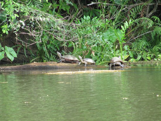 Jungle Land Panama Floating Lodge: Just on the shoreline near the boat