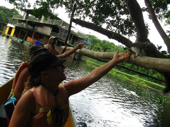Jungle Land Panama Floating Lodge: Feeding Monkeys