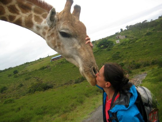 Areena Riverside Resort: I kissed a giraffe, how cool is that?! A prince can not beat that ;-)