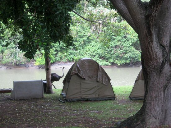 Areena Riverside Resort: Our tent with the river and an ostrich on the background