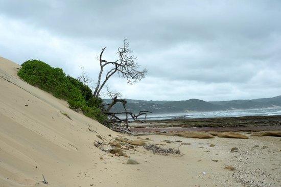 Areena Riverside Resort: Wild coast