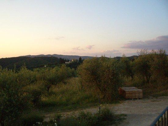 allegretti: A view of the vineyard