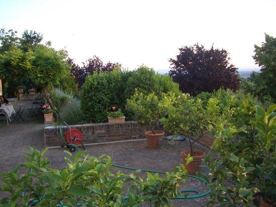 allegretti: A view of the garden
