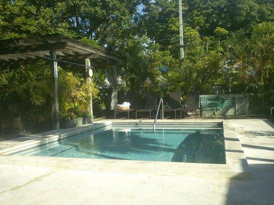 Merlin Guest House Key West: Merlin Pool