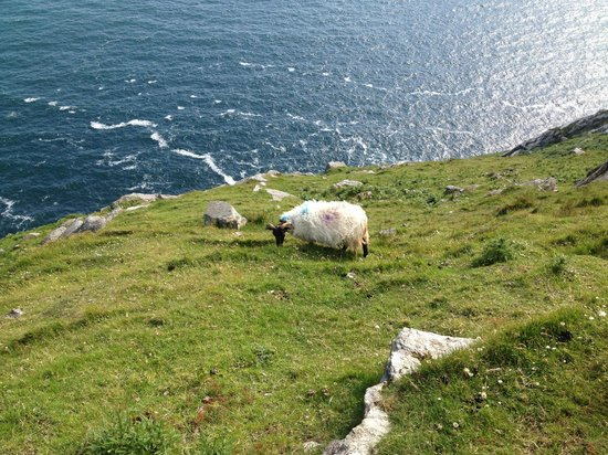 Gray's Guest House: Sheep