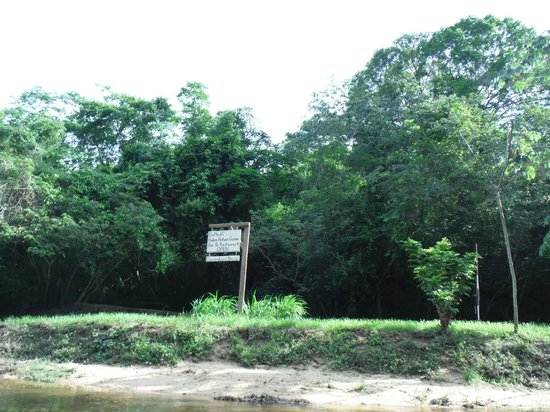 duPlooy's Jungle Lodge: The beach at duPlooy's on the Makal river