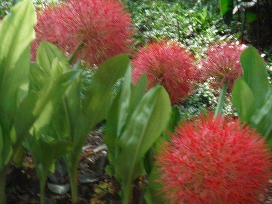 duPlooy's Jungle Lodge: Botanical Garden