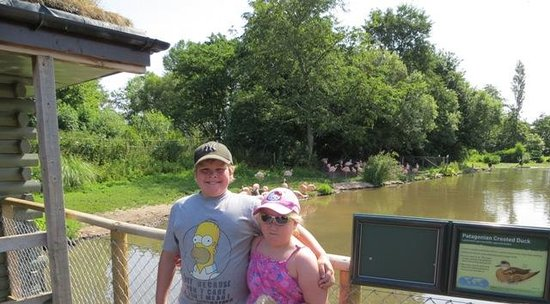 WWT Martin Mere Wetland Centre: Flamingos