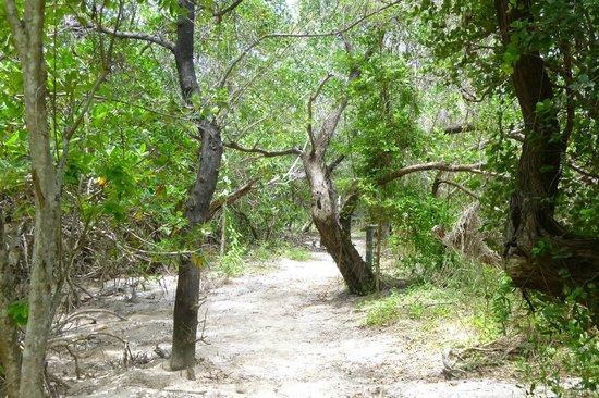 Long Key State Park: walking a trail