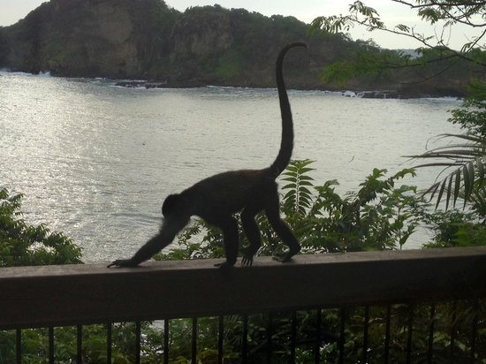 Aqua Wellness Resort: One of the monkeys that visited us