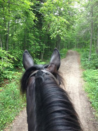 Cindy's Riding Stable Market Street: Wooded trail