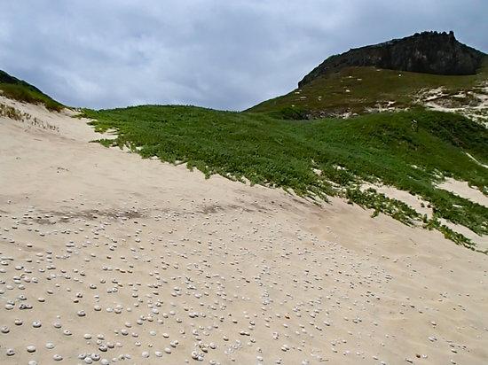 Mimamishima: マイマイの化石。
