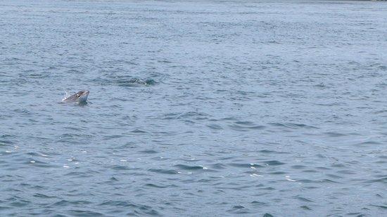 Venture Jet: porpoise saying hello