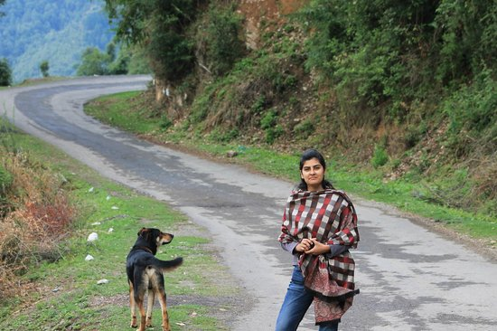 Himalayan Paradise Hotel: Road for a perfect morning walk with Kalu