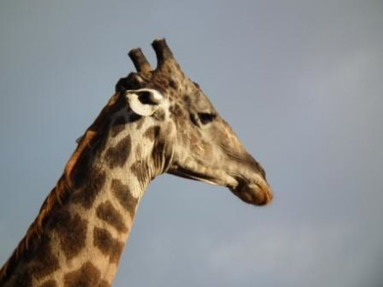 Tarangire Safari Lodge: In the lodge grounds :)