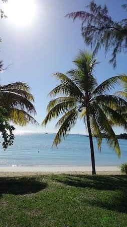 CocoNuts : Beach front