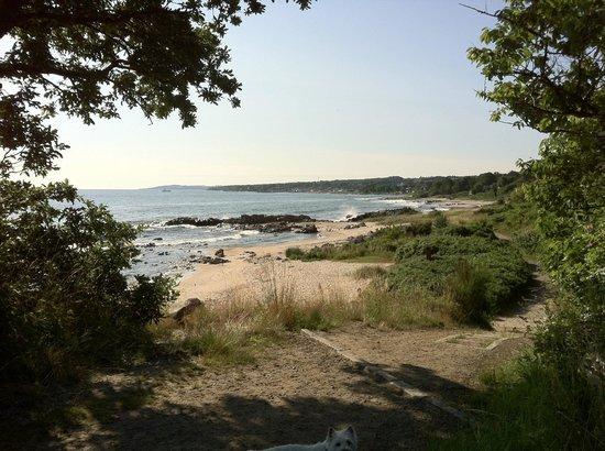 Sandkaas Badehotel: Stranden på den anden side af vejen