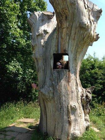 Crocky Trail: Magic tree