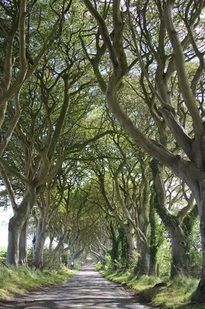 The Whins: The Dark Hedges