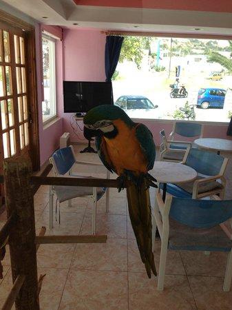 Antony's Hotel: Peters Parrot