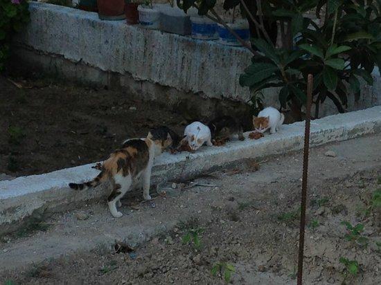 Antony's Hotel: Hotels cats