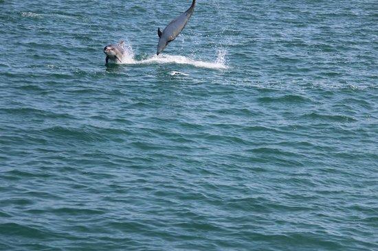 Dolau House: New Quay dolphins