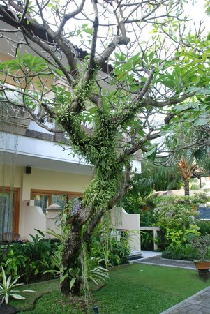 Mentari Sanur Hotel: lovely Plants