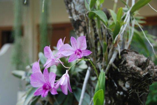 Mentari Sanur Hotel: Flora