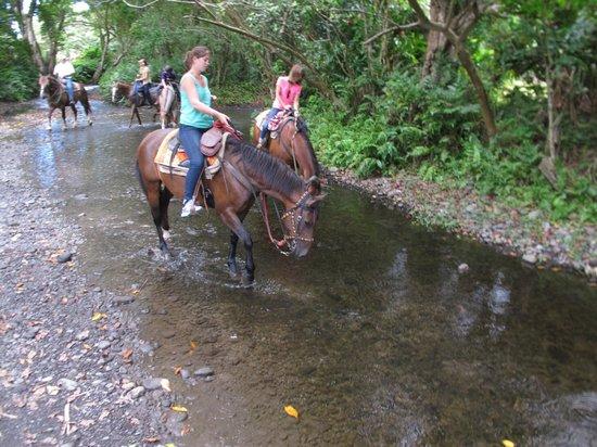 Waipio Na'alapa Trail: walking through a stream