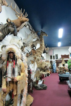 Carr's One of a Kind in the World Museum: Wall of wilderness
