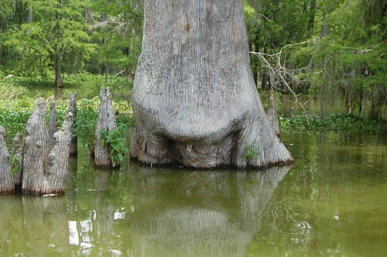 LeBlanc Swamp Tours: Lake Martin - Flora