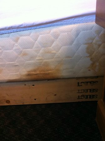 Super 8 Kenosha/Pleasant Prairie: Bed