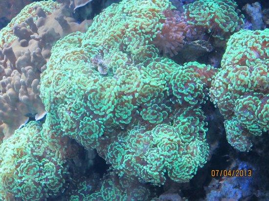 Jellyfish Aquarium Of The Pacific