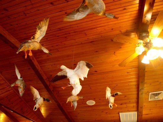 Jojo's Catfish Wharf: Geese overhead, thankfully they are stuffed!