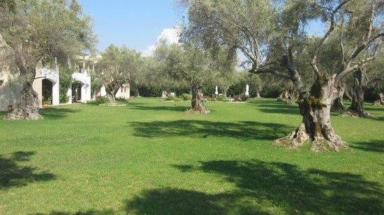 Villa Olivastro : The olive grove