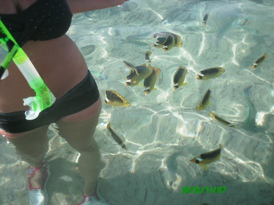 Oonas Dive Club Hotel: loads of fishes