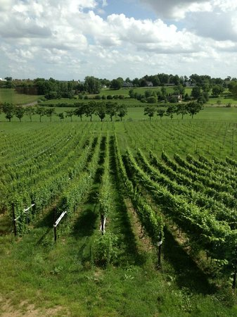 The Vineyard at Grandview: A view of the vineyard from the tasting room
